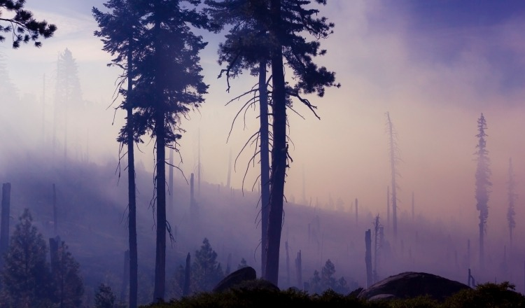 Journalist's Guide to Wildfire: Climate Change Impacts and Solutions