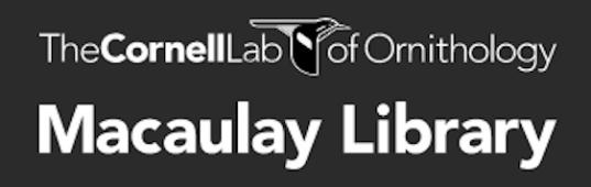 Macaulay Library logo